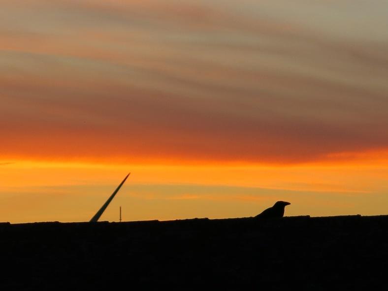 bird-on-rooftop