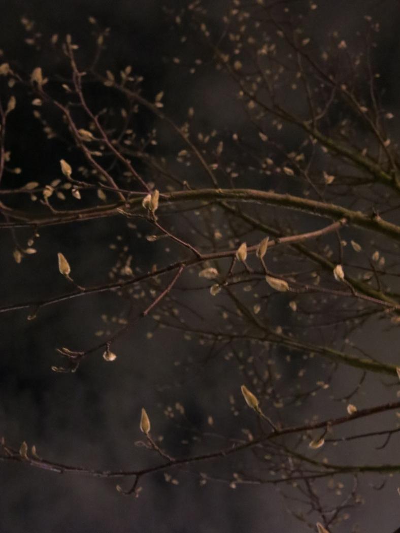 buds-blossom-like-stars
