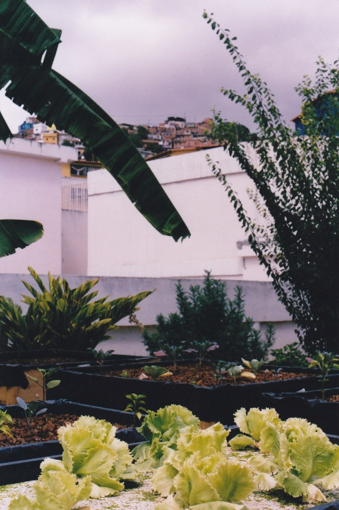micro-huertos