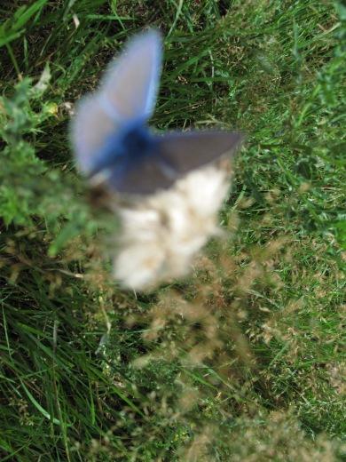 du bleu flou