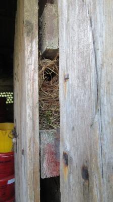 nesting door